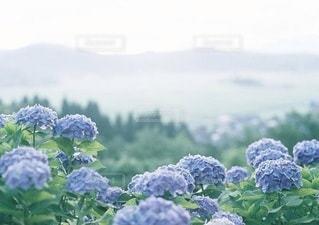 風景の写真・画像素材[5338]