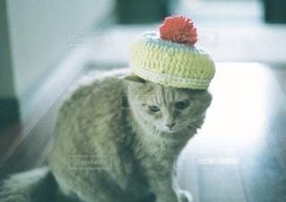 猫の写真・画像素材[5336]