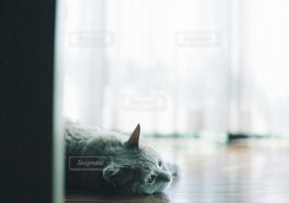 猫の写真・画像素材[5333]