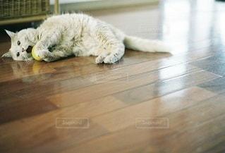 猫の写真・画像素材[5331]