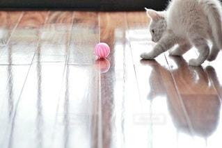 猫の写真・画像素材[5327]