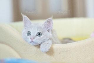 猫の写真・画像素材[5324]