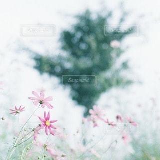 自然の写真・画像素材[5322]