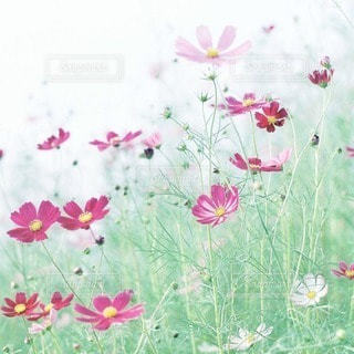 自然の写真・画像素材[5317]