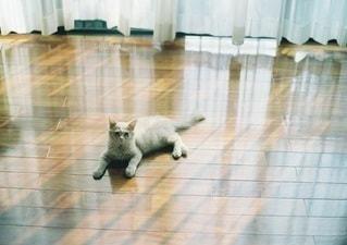 猫 - No.5315