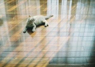 猫 - No.5314