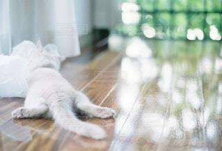 猫の写真・画像素材[5313]