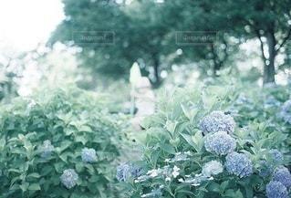 子どもの写真・画像素材[5305]