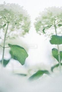 自然の写真・画像素材[5298]