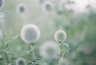自然の写真・画像素材[5297]