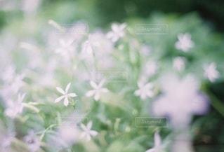 自然の写真・画像素材[5296]
