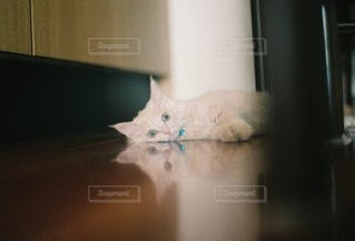 猫 - No.5295