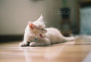 猫の写真・画像素材[5294]