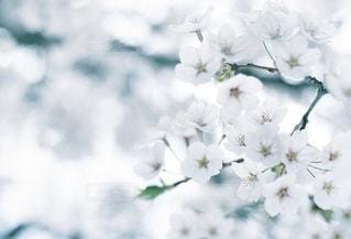 自然の写真・画像素材[5293]