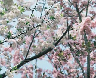 木の枝の上に座って鳥の写真・画像素材[1824743]
