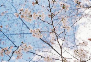 木の枝にとまった鳥の写真・画像素材[2097545]