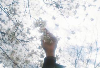 木の前に立っている人の写真・画像素材[2097546]