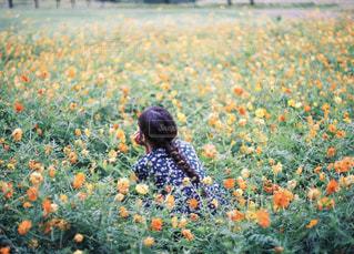 野原の黄色い花の写真・画像素材[2123624]