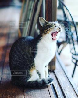 猫の写真・画像素材[269903]