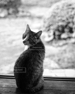 猫の写真・画像素材[269922]