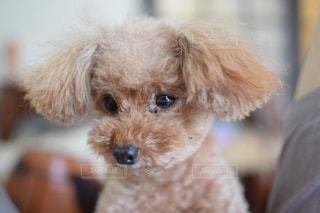 犬の写真・画像素材[264693]