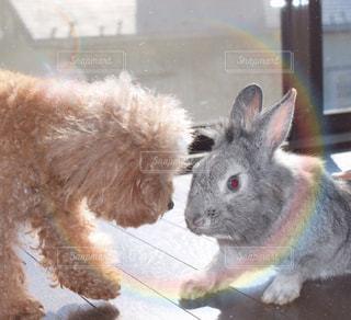 動物の写真・画像素材[264694]