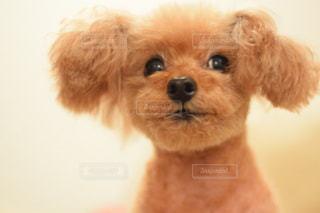 犬の写真・画像素材[264716]