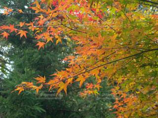 秋の写真・画像素材[265015]