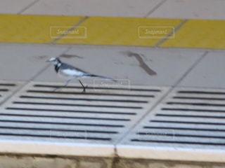 小鳥の写真・画像素材[266053]