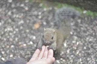 動物の写真・画像素材[5226]