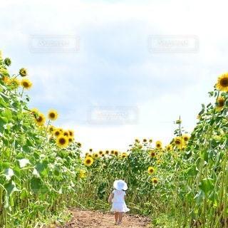 子どもの写真・画像素材[5217]