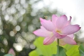 花の写真・画像素材[5200]