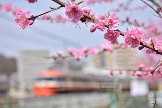 風景 - No.5193