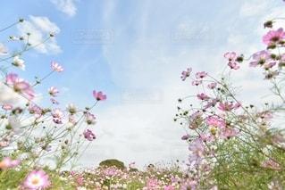 自然の写真・画像素材[5176]