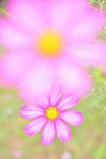 自然の写真・画像素材[5173]