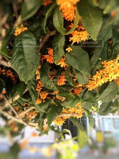花の写真・画像素材[265396]