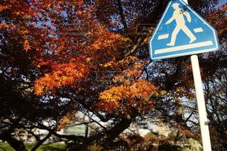 No.267596 風景