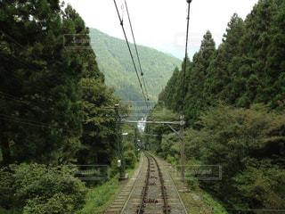 森林の写真・画像素材[276768]