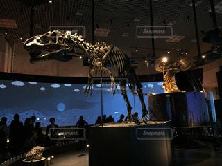 上野の国立科学博物館の恐竜の骨格標本の写真・画像素材[1609088]
