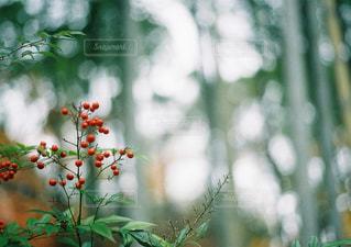 自然の写真・画像素材[267661]
