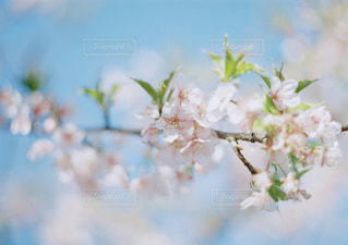 春 - No.267692