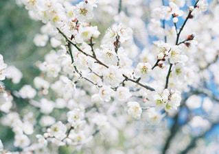 花の写真・画像素材[269393]