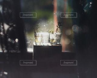 飲み物の写真・画像素材[271211]