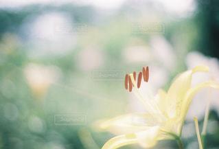 花の写真・画像素材[280590]