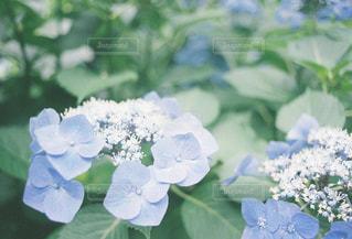 花の写真・画像素材[280591]