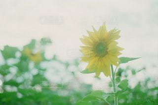 花の写真・画像素材[289904]