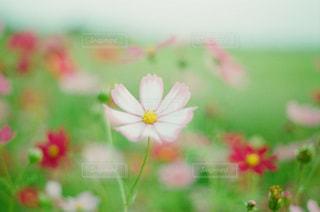 花の写真・画像素材[289905]