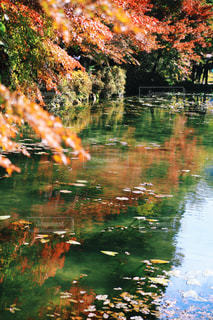 秋の写真・画像素材[303717]