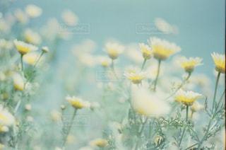花の写真・画像素材[315473]