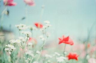 花の写真・画像素材[315478]
